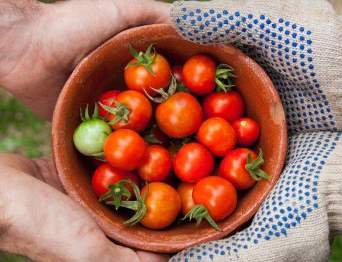 Alimentazione biologica uguale più sana?